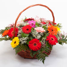24 Gerberas in a Basket
