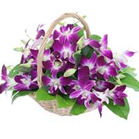 10 Purple Orchids in Basket