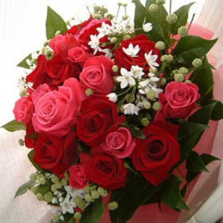 18 pink red roses in a bouquet